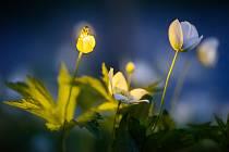 Radim Schreiber se stal profesionálním fotografem a svým objektivem se zaměřuje hlavně na světlušky. Další fotografie najdete na webu www.MagickeSvetlusky.cz.