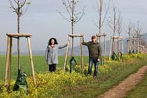 Alejí roku se může stát ta nedávno vysazená nedaleko Řípu. Na snímku starosta Mnetěše s manželkou u stromů v aleji. Také oni loni stromky sázeli spolu s řadou dalších.