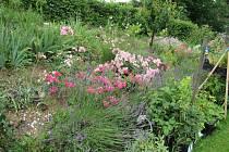 Trend stále kvetoucích zahrad ovládl Evropu a vrací se i do českých zahrad. Tam patří podle Věry Šumové i ovocné stromy, nikoliv konifery.I na severu se může dařit meruňkám, broskvím , ale především sem patří jabloně.