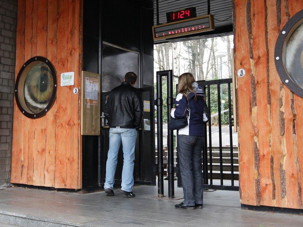 V liberecké zoologické zahradě napadl bílý tygr tři lidi.
