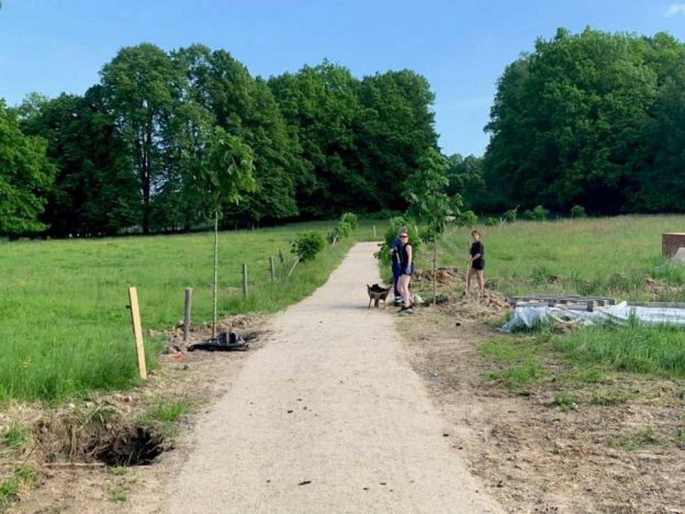 Cestu pro pěší k rozhledně lemuje nová alej kaštanů, sázeli ji dobrovolníci.