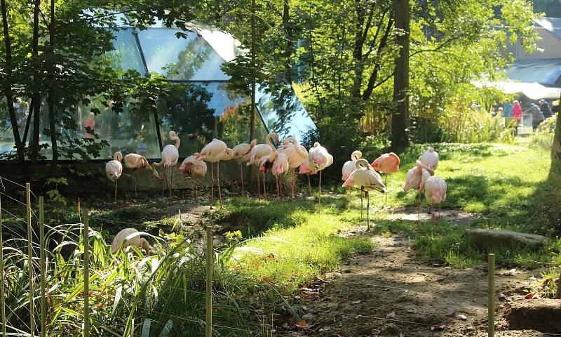 Mezinárodní den zvířat v liberecké zoologické zahradě.