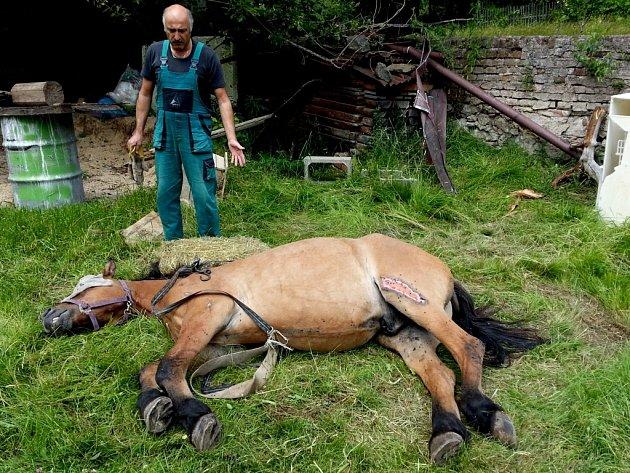 V Novém Městě pod Smrkem spadl kůň ze zídky. Postavit se sám na nohy už ale nezvládl. Pomohli až hasiči a technika.