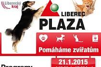 V Liberci se uskuteční benefice na podporu týraných zvířat.