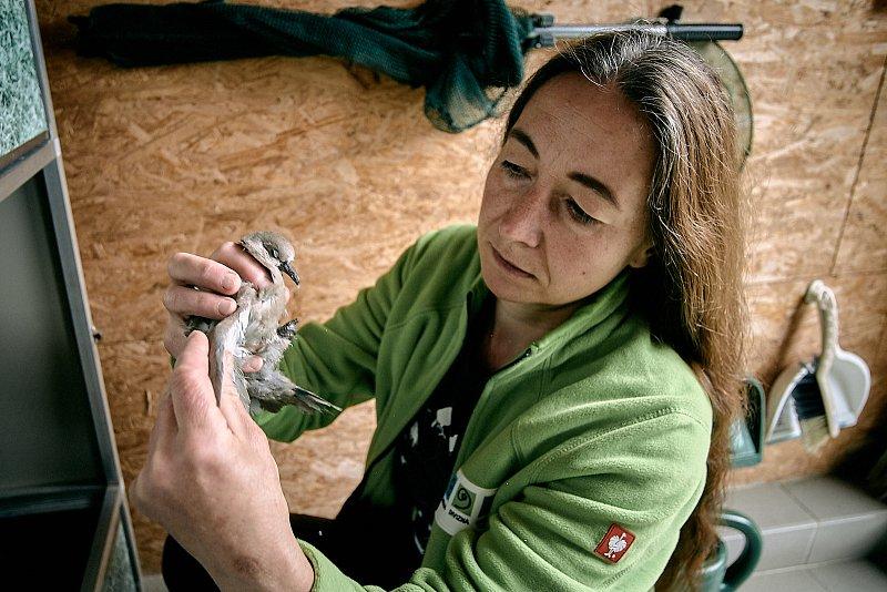 Archa – Centrum pro zvířata vnouzi