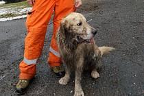 Pohřešovanou seniorku našli kynologové z Hejnic. Na snímku pes kynologa HZS LK Pavla Vitáka.