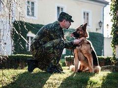 Vojenský pes Athos, který byl předloni vážně zraněn v Afghánistánu, obdržel v Chotyni na Liberecku vyznamenání od ministra obrany Vlastimila Picka.