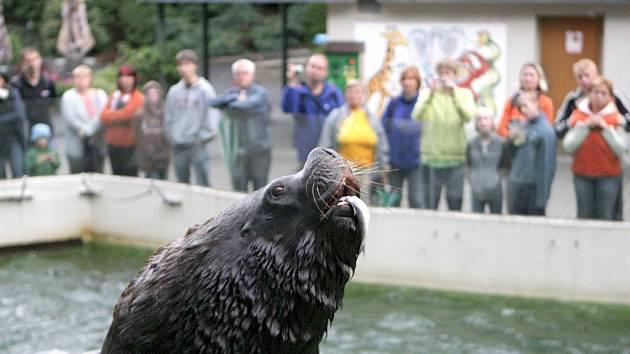Zoo Liberec. Ilustrační foto.