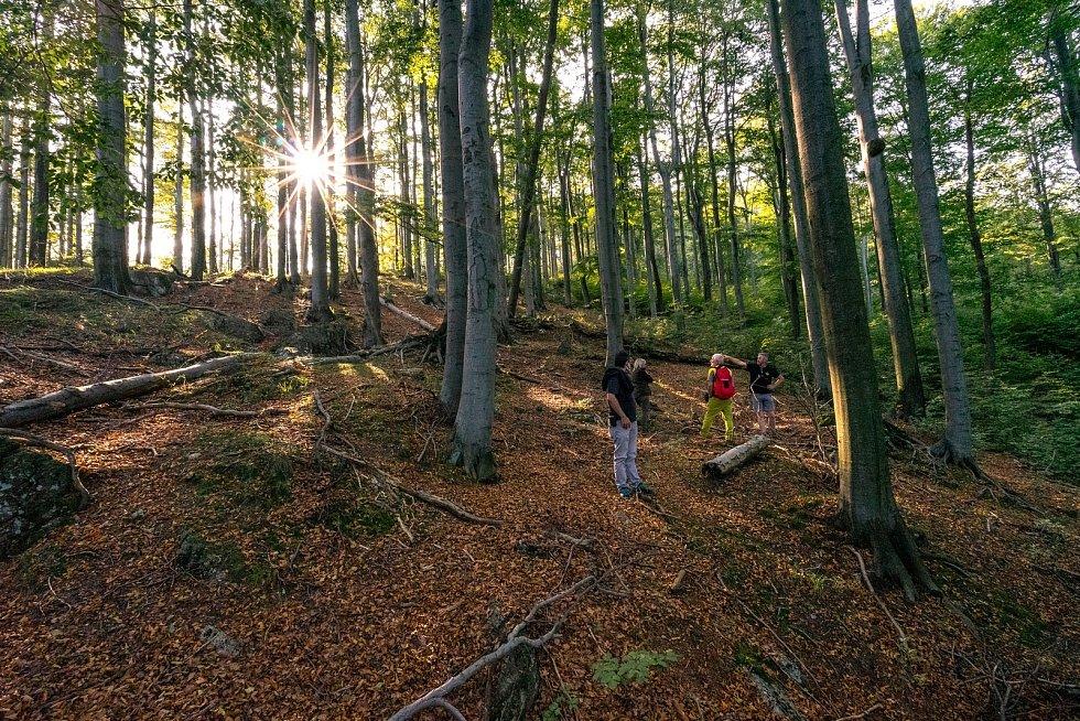 Hodnotitelé z organizace UNESCO navštívili Jizerskohorské bučiny.
