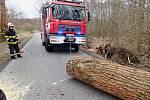 Hasiči likvidují strom, který přes vozovku srazil silný vítr na Liberecku