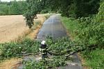 Spadlý strom. Ilustrační foto.