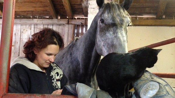 OSTATNÍ KONĚ COLLIANDERA ŠIKANUJÍ. Farmářka, která ho má vdočasné péči, mu hledá milující rodinu.