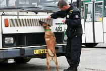 PSOVODI se svými čtyřnohými svěřenci hledají drogy a cigarety. Pro psy je to hra, proto se pro tuto činnost nejvíce hodí vášniví aportéři, lovecká plemena a prosazují se i kříženci.