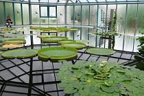 Tichá krása leknínů je v botanické k vidění do října.