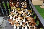 I když letos bylo hub hodně, je dobré nejen sbírat, ale podívat se, jak jsou krásné.
