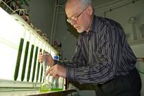 Řasy vypěstované v rámci celosvětově unikátního projektu v liberecké spalovně se dají použít k výrobě kosmetiky, v potravinářství, ale především pro výrobu paliva.