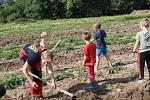 Na rodinné farmě Lukava v Jindřichovicích se sklízely brambory jen s pomocí rukou a koní.