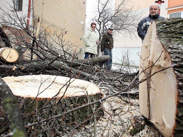 Proti poražení lípy protestovalo zhruba 40 místních obyvatel. Geometrický výměr dokázal, že jedna třetina stromu skutečně patřila společentví.