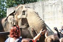 Mezinárodní den slonů v liberecké zoologické zahradě.