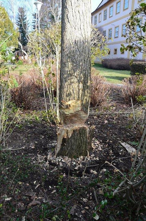 Poškozený strom.