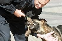 Policejní psi poměří své síly o pohár strážníků.