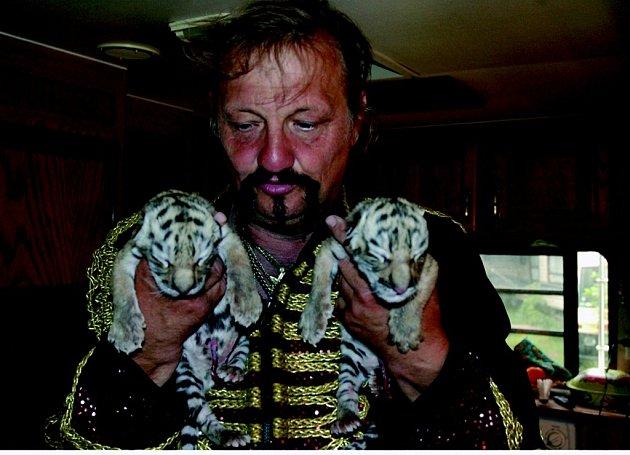 Mláďata tygra ussurijského, narozenav národním cirkusu Joo.