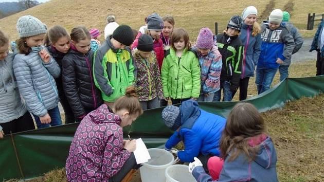 Českodubští školáci mapují výskyt obojživelníků a plazů.