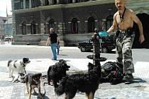 Jindřich Baudyš se v horku i se svou psí smečkou zastavil u kašny v centru Liberce, vytáhl misky a osvěžující občerstvení mohlo začít.