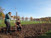 Na pozemcích Hospodářské a lesnické školy ve Frýdlantu vzniká naučná zemědělská stezka. Poslouží jak škole při výuce, tak veřejnosti k seznámení se s tím, co se v kraji teď i kdysi pěstovalo