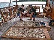V březnu se podařilo pracovníkům zoo ve spolupráci s jednotkou Indonéského námořnictva dopadnout loď sšestičlennou posádkou pytláků.