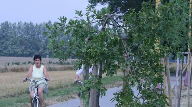 NEVINNÉ OBĚTI. Jako nevinné oběti vandalů vypadají polámané duby v aleji mezi Hrádkem a přechodem do Polska.