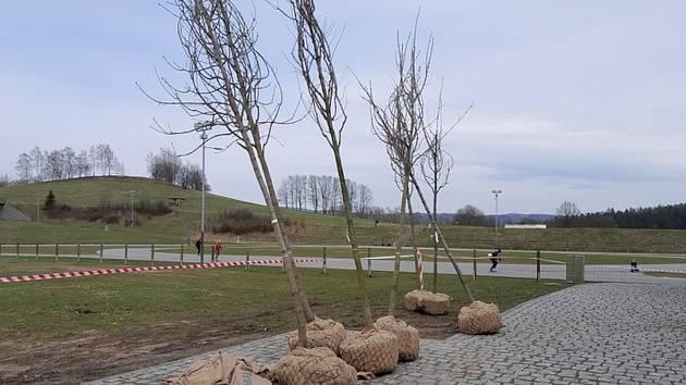 Dřeviny připravené k výsadbě aleje v areálu.