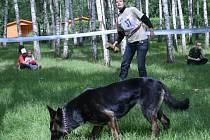Místo aportu se někteří psi více zajímali o rozhozené maso.