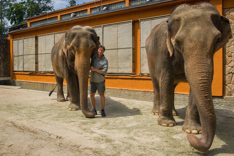 Sloni liberecké ZOO