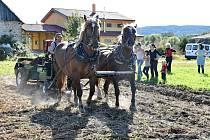 Martin Rosenbaum. Dobývání brambor tradičním způsobem pomocí koňského potahu.