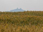 Pšeničné pole nedaleko Turnova dne 8. července. V pozadí se tyčí zřícenina hradu Trosky.