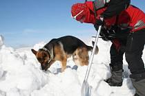 Pavel Hořejší chválí svého psa za nález osoby v laviništi.