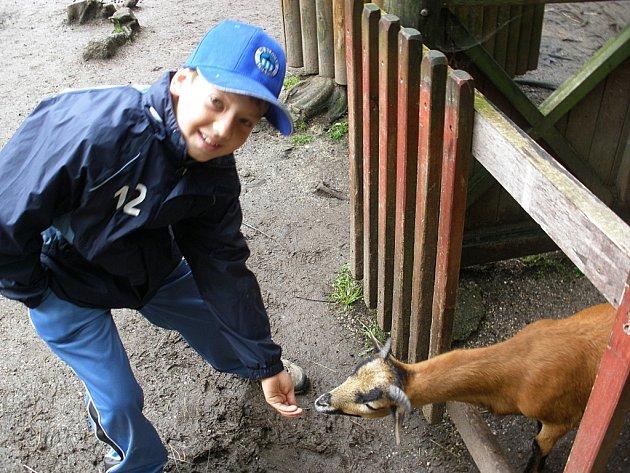 DĚTI KAŽDÝ DEN krmily kozy.