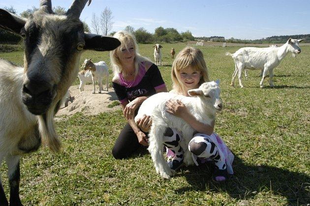 KOZU SI HLADILY POPRVÉ. Mnoho dnešních dětí se na akcích chovatelů se živou kozou setká poprvé ve svém životě.