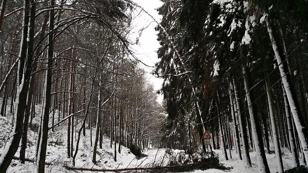 Hasiči se v noci nezastavili. Odstraňovali popadané stromy.
