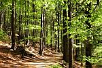 Zelený duben
