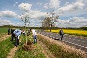 Symbolická výsadba nových stromů v Kočárové aleji podél silnice III/2909 mezi Raspenavou a Krásným Lesem proběhla 27. dubna za účasti vedení kraje, Dolnoslezského vojvodství, starostů Frýdlantska a dalších hostů.