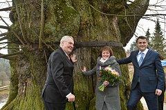 Letošní návštěva prezidenta Zemana žádné objímání stromů na programu nemá.