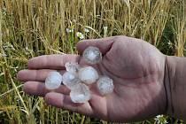 Kroupy způsobily farmářům na Frýdlantsku milionové škody. Po úrodě bylo za pouhých 10 minut.