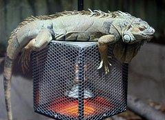 Některá zvířata seuž přemisťují z venkovních výběhů a voliér do teplých pavilonů, jiná se ukládají k zimnímu spánku.