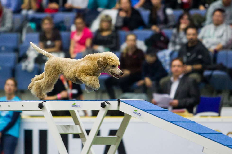 Poslední den Mistrovství světa v agility proběhl 8. října v Home Credit areně v Liberci. Na snímku je disciplína agility jednotlivců se středně velkými psy.