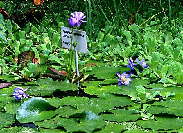 Botanická zahrada. Ilustrační foto