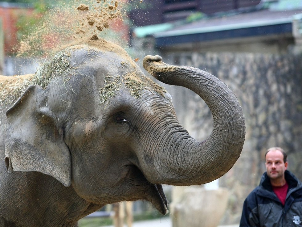Slonice Bala dorazila do liberecké zoo.