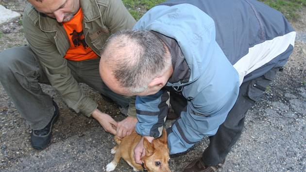O BEZPLATNÉ OČKOVÁNÍ psů proti vzteklině byl mezi lidmi bez domova velký zájem. Přinesli i štěňata.