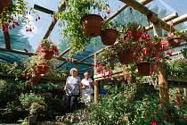 V Tradičním zahradnictví Jiřího Pevného v libereckých Pavlovicích  probíhá výstava fuchsií.